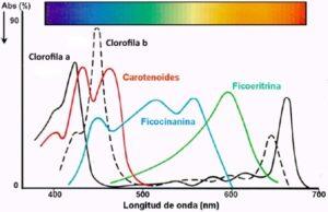Pigmentos de la espirulina