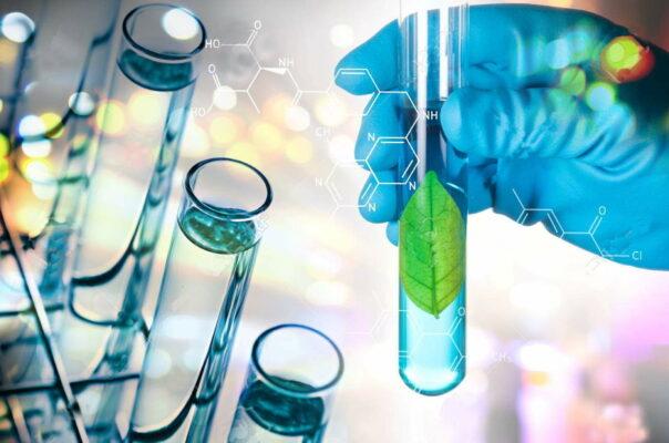espirulina propiedades estudios científicos